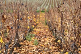 Un week-end en Champagne – 1ère partie : Epernay