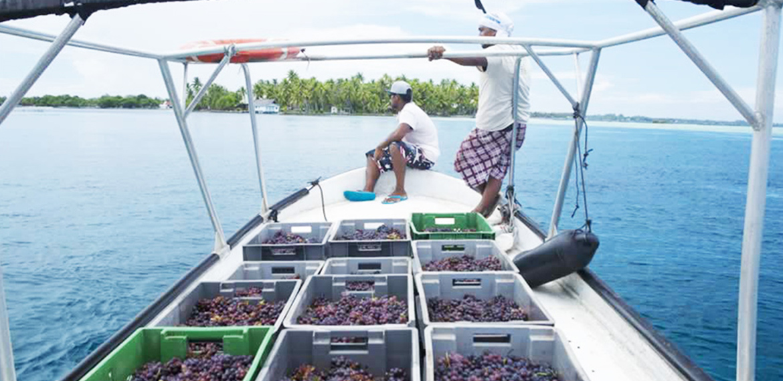 Tahiti fait aussi du vin !