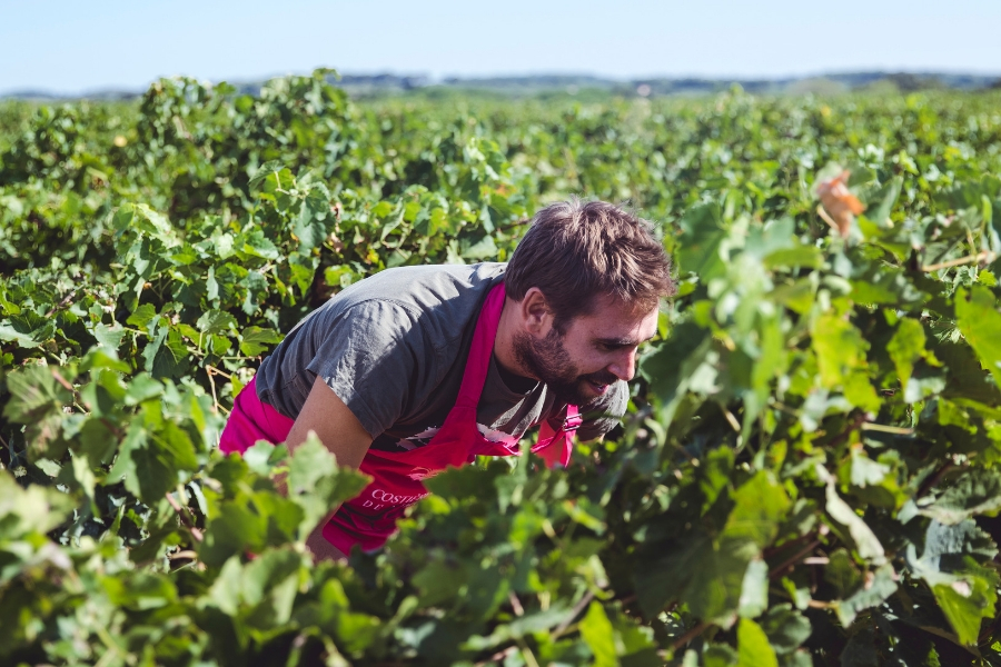 vignes costières de nimes